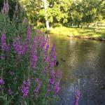 Milham Park