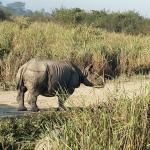 Photo de Kaziranga National Park