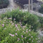 White River Cottages Foto