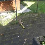 Broom left laying around