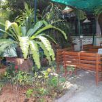 shaded garden area