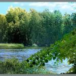 Der Branitzer Badesee, eine Naturschönheit