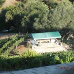 View of the Los Willows Vineyard from our room....