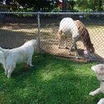 Bark park with friendly pony!
