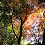 岩屋堂の紅葉。