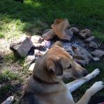 Even our dogs had a great stay