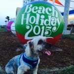 Virginia Beach is pet friendly