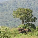 Elephants seen from the watchtower overlooking Arusha National Park