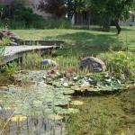 vue sur la piscine naturelle, les plantes qui filtrent l'eau