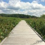 Punderson Manor - boardwalk through marsh