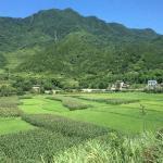 NingXiangSi ShangYe Jie