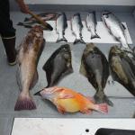 Day's catch