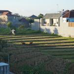 vue de la terrasse sur le toit