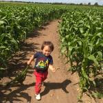 Skylark Maize Maze & Funyard Foto