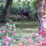 Donkey by stream