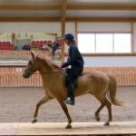 Demonstrating the Icelandic Horses 5 gaits