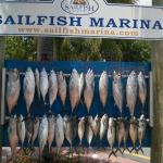 Sailfish Marina Resort Foto