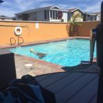 BEST WESTERN PLUS Newport Beach Inn Foto