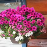 flowers on the front deck