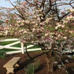 Grounds in Spring bloom.