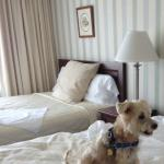 Please note there is a towel on the bed for Sammy The Wonder Dog.
