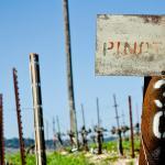 Original 1964 Pinot Noir end post in the HMR Vineyard