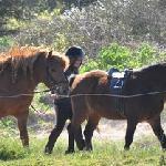 balades et stages à poneys