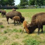 Wildlife Prairie Park Foto