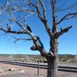 Lamy Monk tree