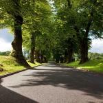Tree Lined Driveway At Malone Golf Club