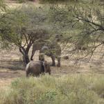 elephants in the backyard