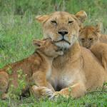 Mawere Tours and Safaris - Day Tours