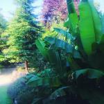Классная зелень на территории L'amore