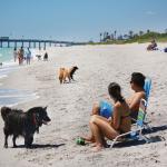 Brohard Paw Park in Venice is a popular dog beach.
