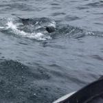 dolphin tales!