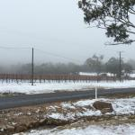 A little snow on the vines