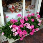 One of many, stunning shop window boxes!