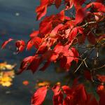 Fall by the water at Beaver Lake.