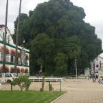 Photo of El Tule