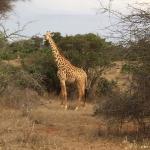 Safari avec hassan