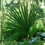 Jardin jungle