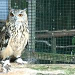 The owls were delightful!