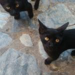 Hotelowe kotki