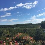 Rose's Berry Farms, LLC
