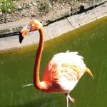 Ringo the flamingo who lives in the pond at the front of the park...