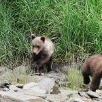 Cubs on the move