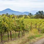 Agate Ridge Vineyard