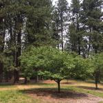 John A. Finch Arboretum Foto