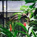 Summit Botanical Gardens Foto