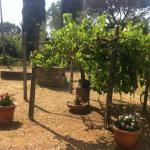 Una parte del giardino